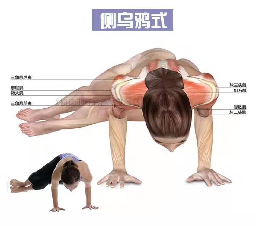 瑜伽里的支撑类体式,让你的上半身更加有力