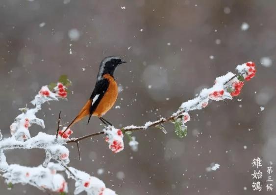 《荐读》小寒:小寒虽寒,望春则暖