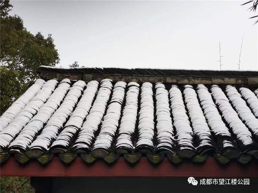 来!望江楼赏雪