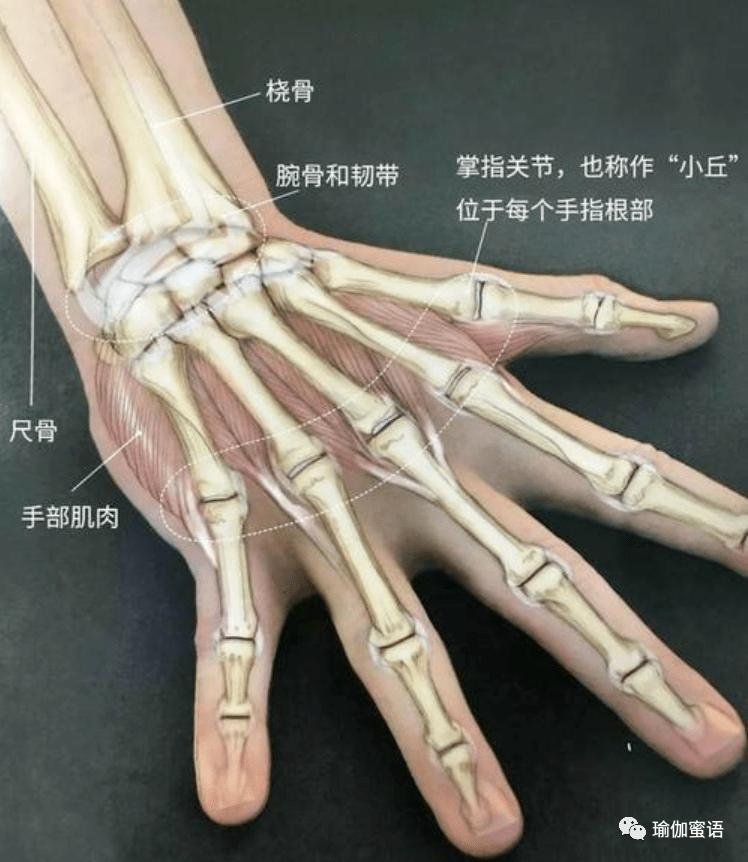 练瑜伽,手腕疼,没有力气?这10个动作要常练!