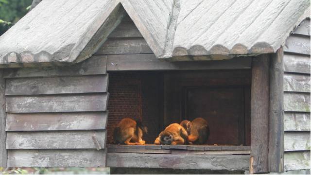 取暖基本靠抖?来看小动物们如何安全过冬