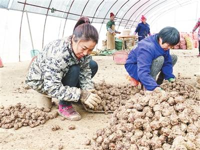 """南昌县三江镇:种出大市场 产出""""含金量"""""""