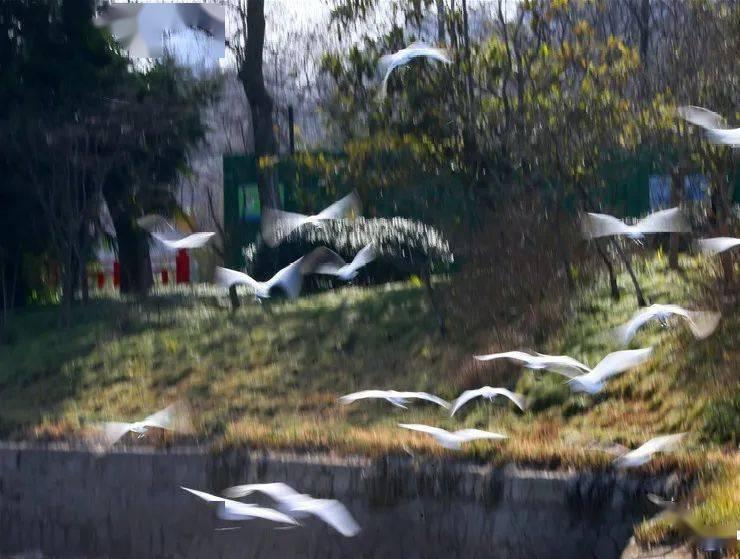 """扬州这个免费公园现""""奇景""""!你见到了吗?"""