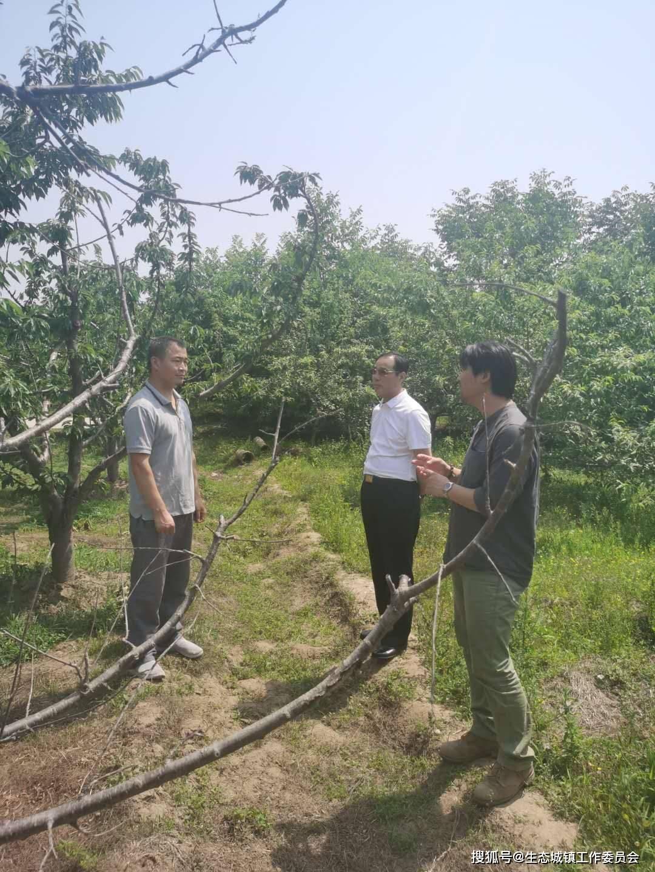 立足西集镇创新发展绿色农林经济的倡导精神