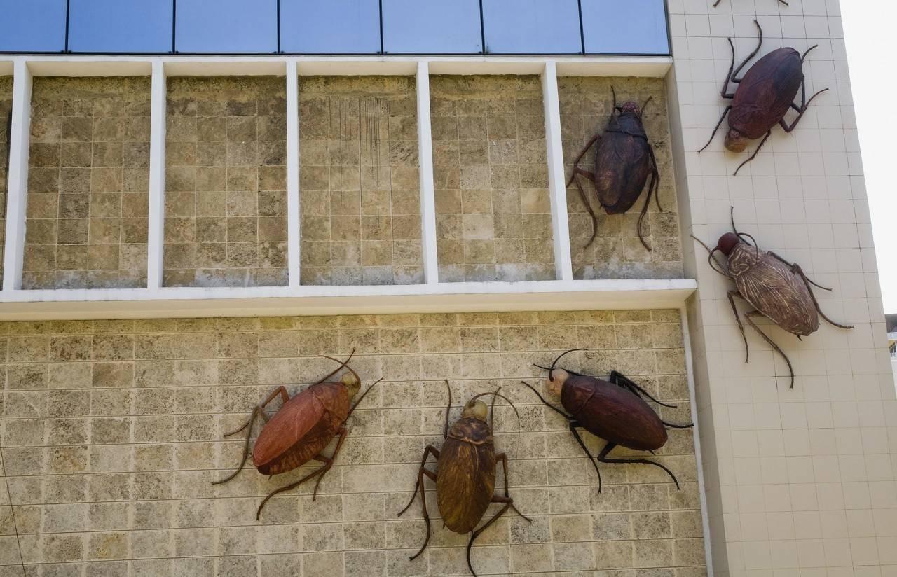 最安全的方法家中驅除蟑螂的辦法(除蟑螂小妙招)