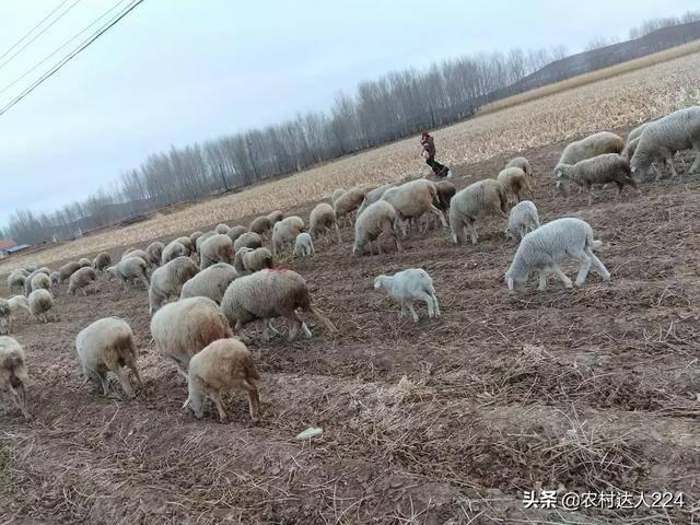 农村养殖什么赚钱(新手养什么比较挣钱)