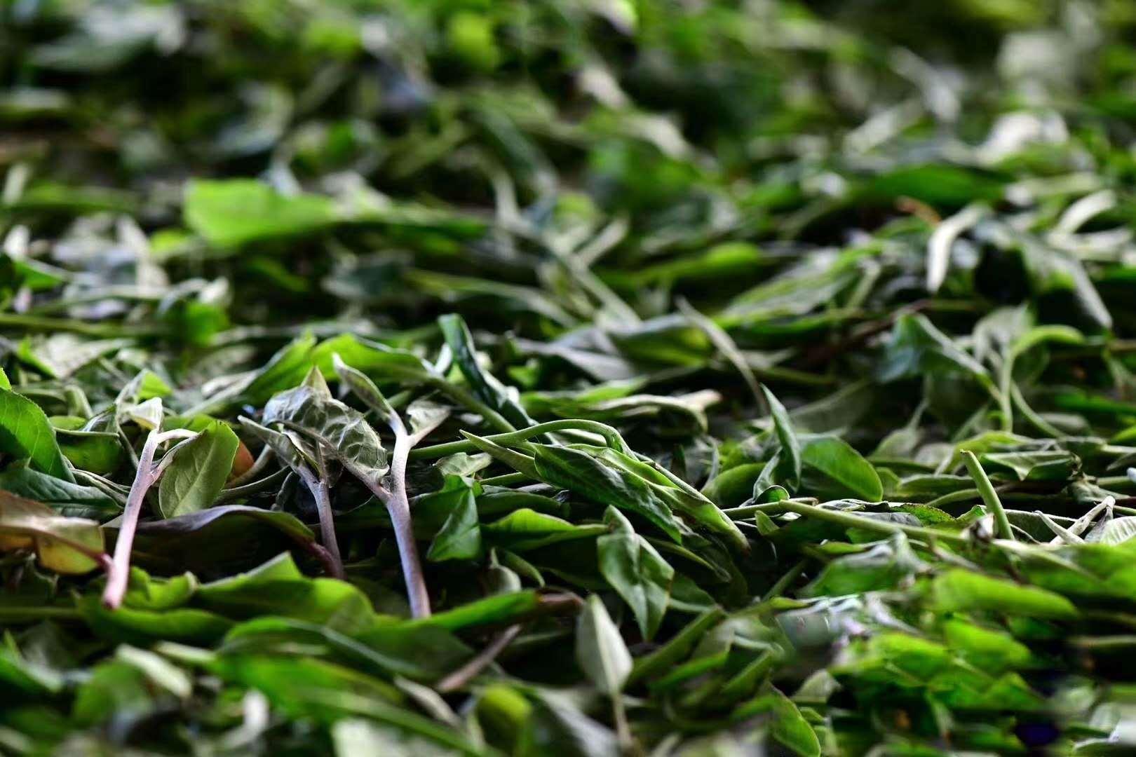 新鲜的茶叶怎样储存为最佳