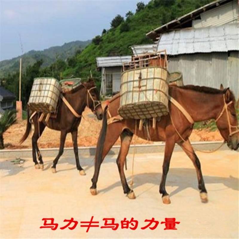 1千瓦等于多少排量(一马力就是一匹马的力量吗)插图(2)