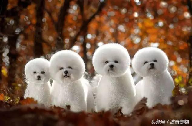 中国一共有多少种狗(狗狗品种介绍大全插图