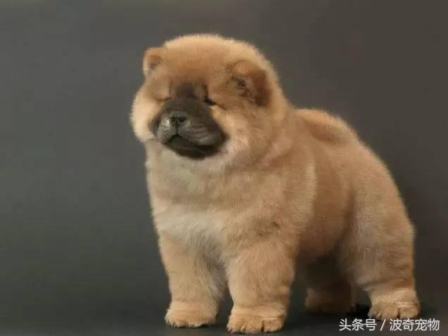 中国一共有多少种狗(狗狗品种介绍大全插图(5)