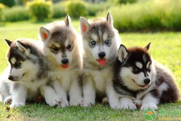 狗有多少品种(不同品种狗价格多少)插图(1)