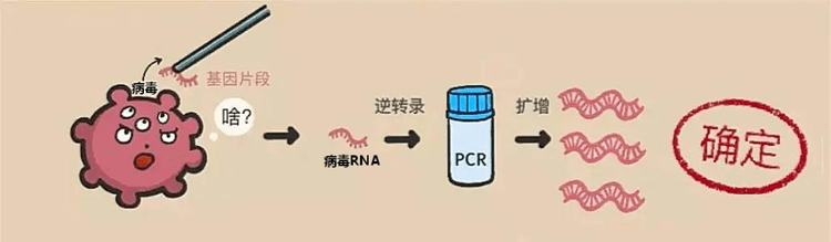 核酸检测怎么做 网络快讯 第1张