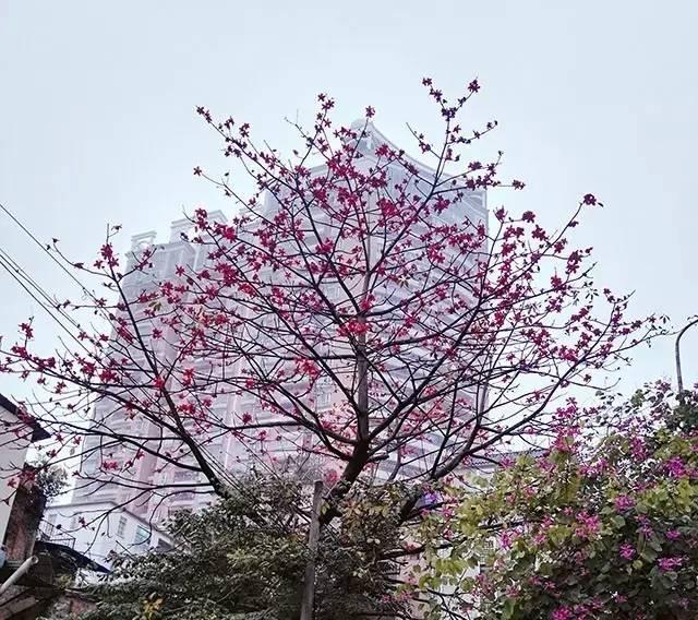 春天可以干什么(春天人们都在做什么事)