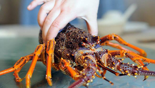 澳洲龙虾的做法(澳洲龙虾怎么做好吃)插图