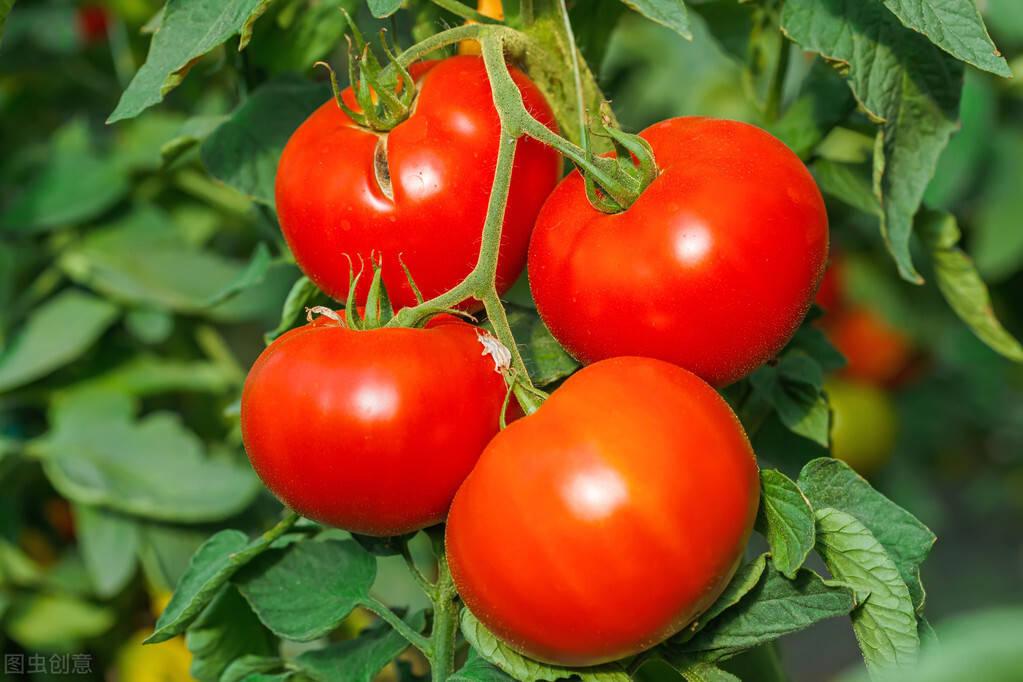 吃过就会爱上,番茄烩金针菇,酸酸甜甜简单易学真下饭