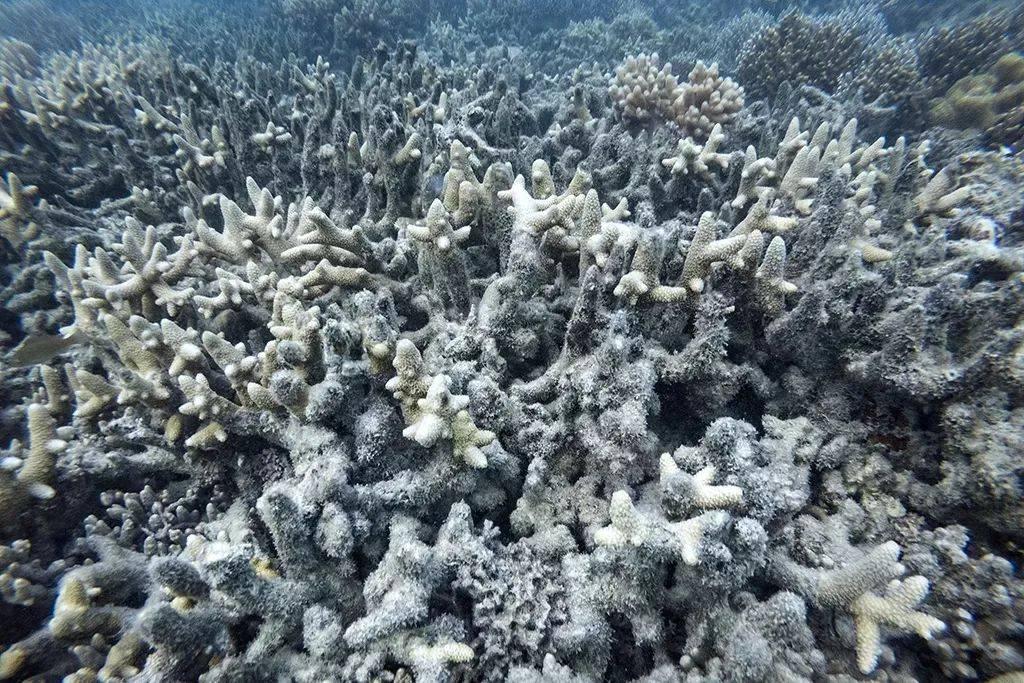 如果气候变化导致珊瑚消失,世界会变成什么样?