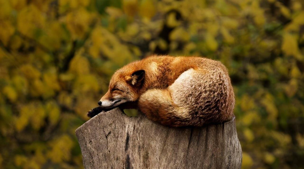 夏天的晚上有什么动物在叫【精选5篇】 夏天夜晚活动的动物