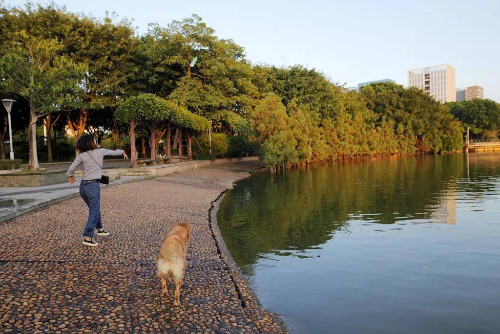 遛狗拴绳入法,人狗矛盾能解了?