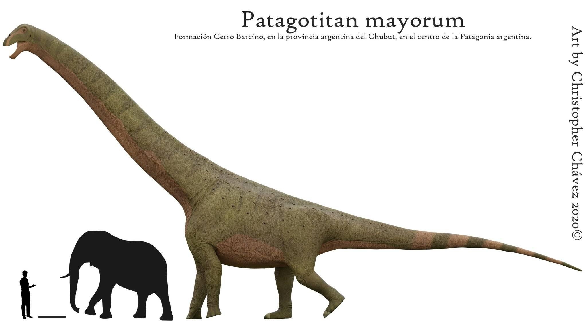 迄今为止最巨大陆生恐龙或被发现,体重超70吨,相当于10头大象