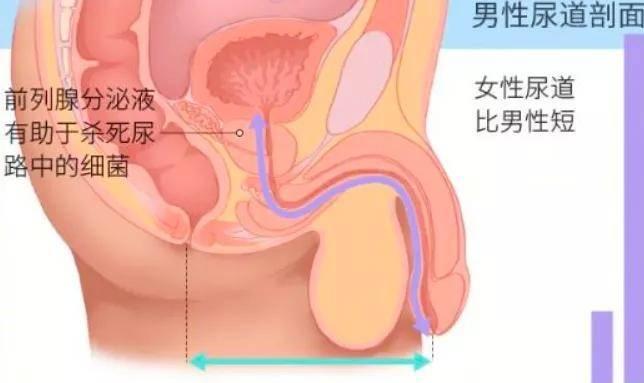 成體肝髒中新生肝細胞來源被發現,科學家揭示肝髒再生奧秘
