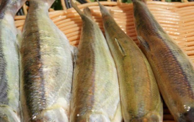 公认最好吃的5种鱼, 全吃过的是土豪