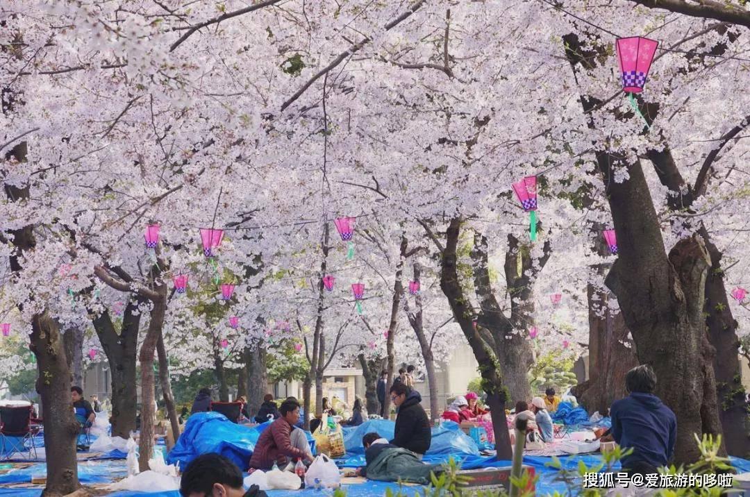 这份美不胜收的《日本赏樱攻略》,明年或许用得上
