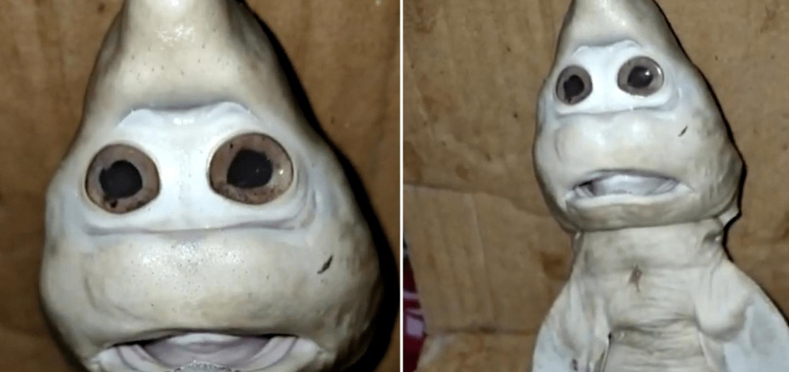 """原来印尼捕获了一只""""脸鲨"""",变异物种是外星生物?"""