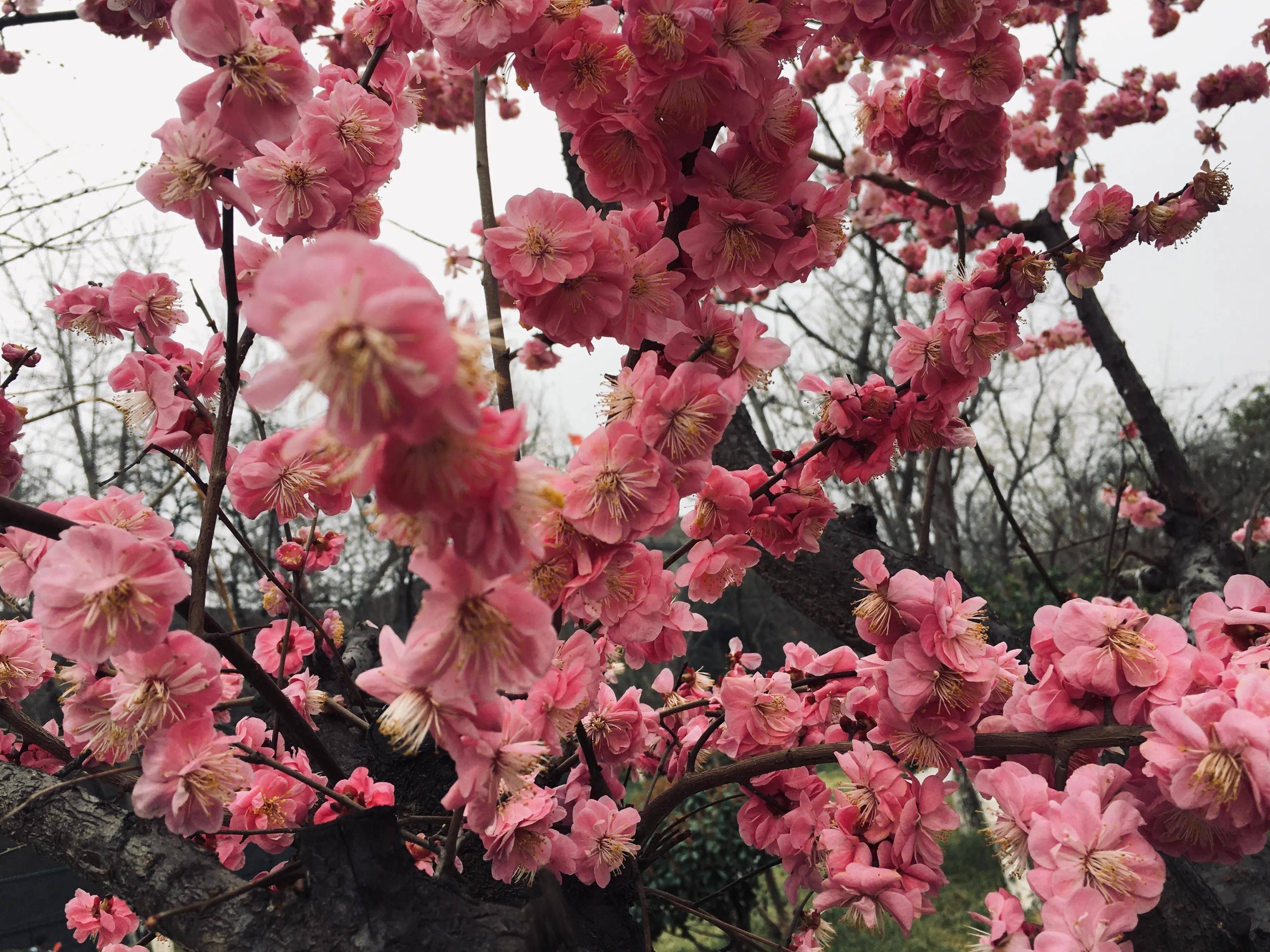 高清组图:西安春日美景展千年古都迷人魅力