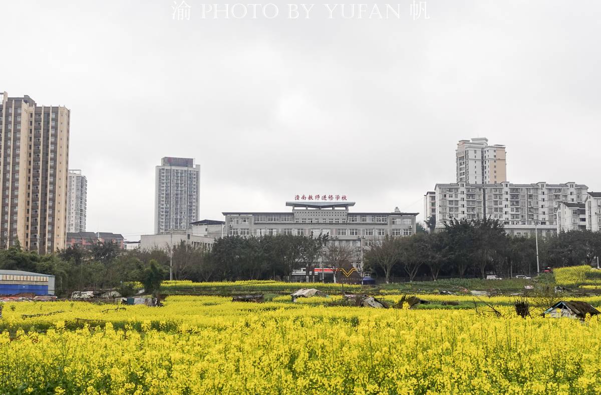 重庆这里宜居又幸福,家中就能欣赏油菜花海,窗外看出去美如画卷
