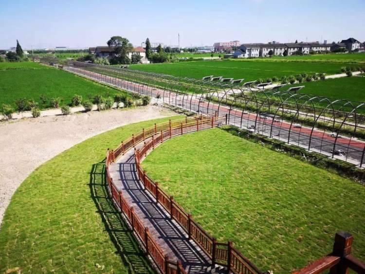 看嘉乡丨花海、稻田、农耕文化……到北新村体验田园生活