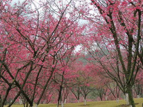 南宁周边游|春日超上镜的拍照圣地