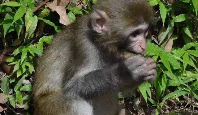 属猴人和谁在一起能赚大钱?