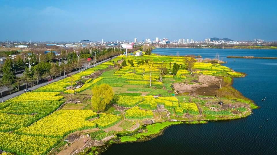 原创             记得收藏,淮南完整版春季赏花攻略来了,错过要再等一年