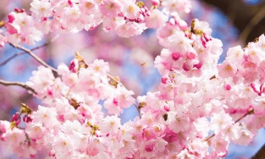 3月过后,桃花袭来,红鸾相伴,三生肖良缘归来,鸳鸯比翼双双飞