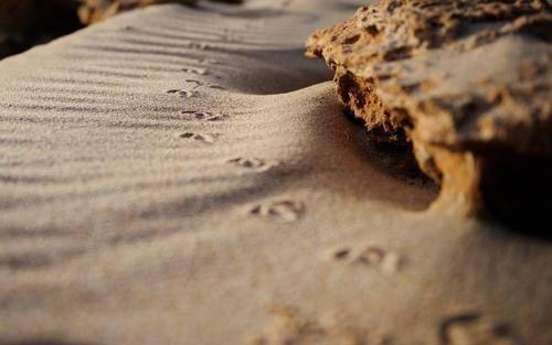 世界沙漠排行_全球排名前十的沙漠,中国拥有两个,第一名面积达900万平方公里