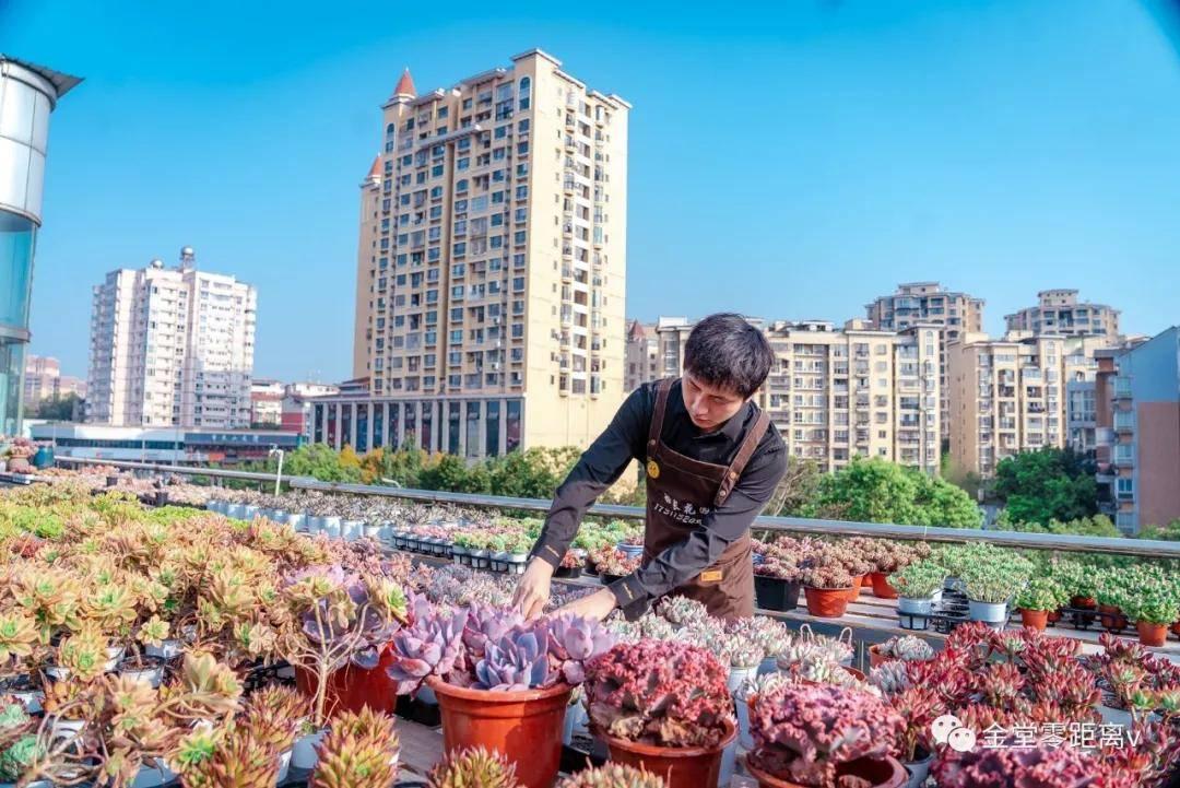 惊艳!金堂这家屋顶花园近5万盆多肉,太美啦!