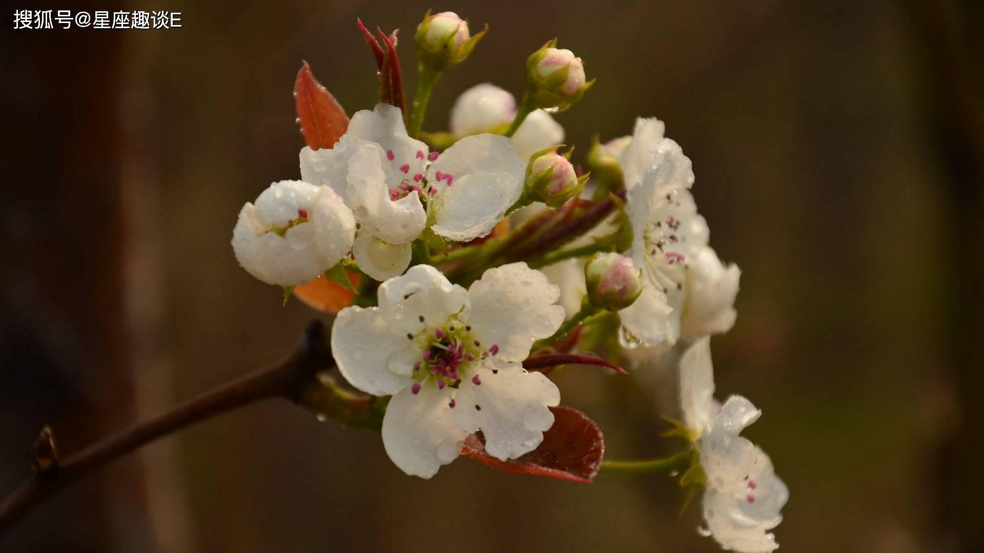 在4月中旬,桃花绽放,笃定情缘,百年好合的三大星座  第1张