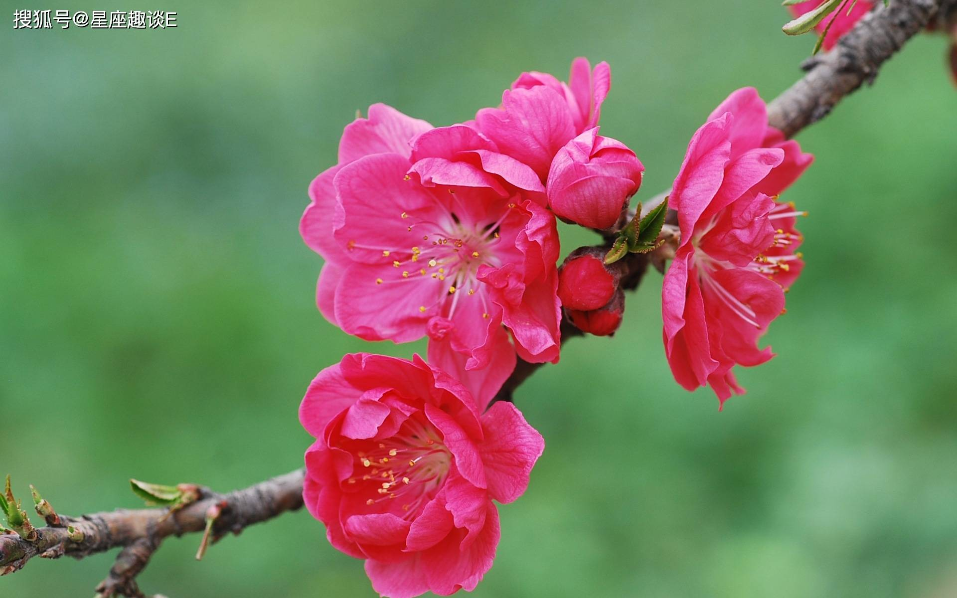 在4月中旬,爱情归位,满心欢喜,修成正果的三大星座  第1张