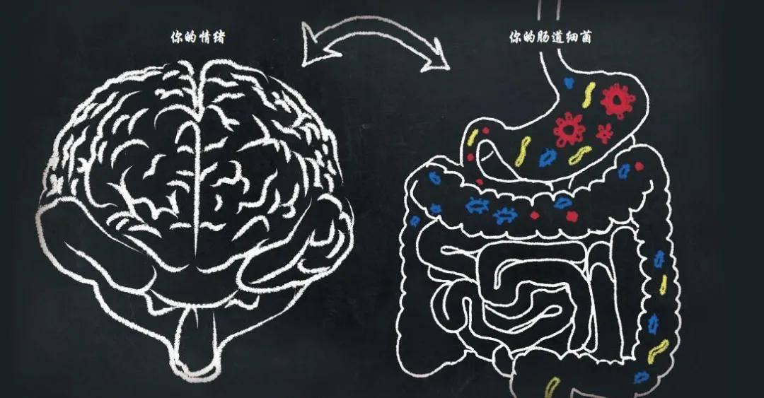 肠道菌群能远程遥控大脑,让我们的大脑忘掉恐惧?