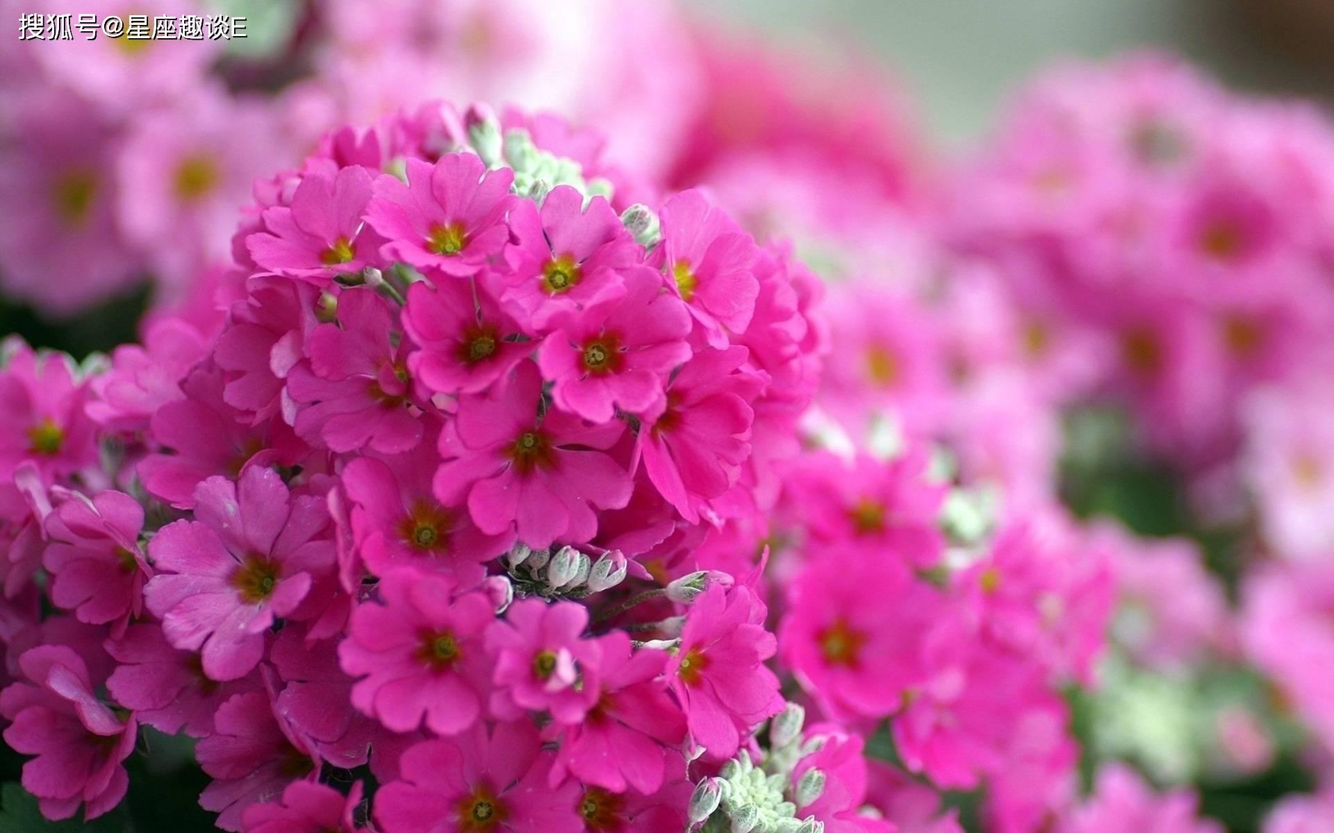 在4月下旬,桃花来袭,天赐良缘,珠联璧合的三大星座  第3张