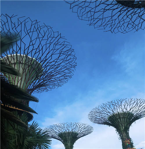 """去新加坡留学,这10大""""冷常识""""了解一下!"""