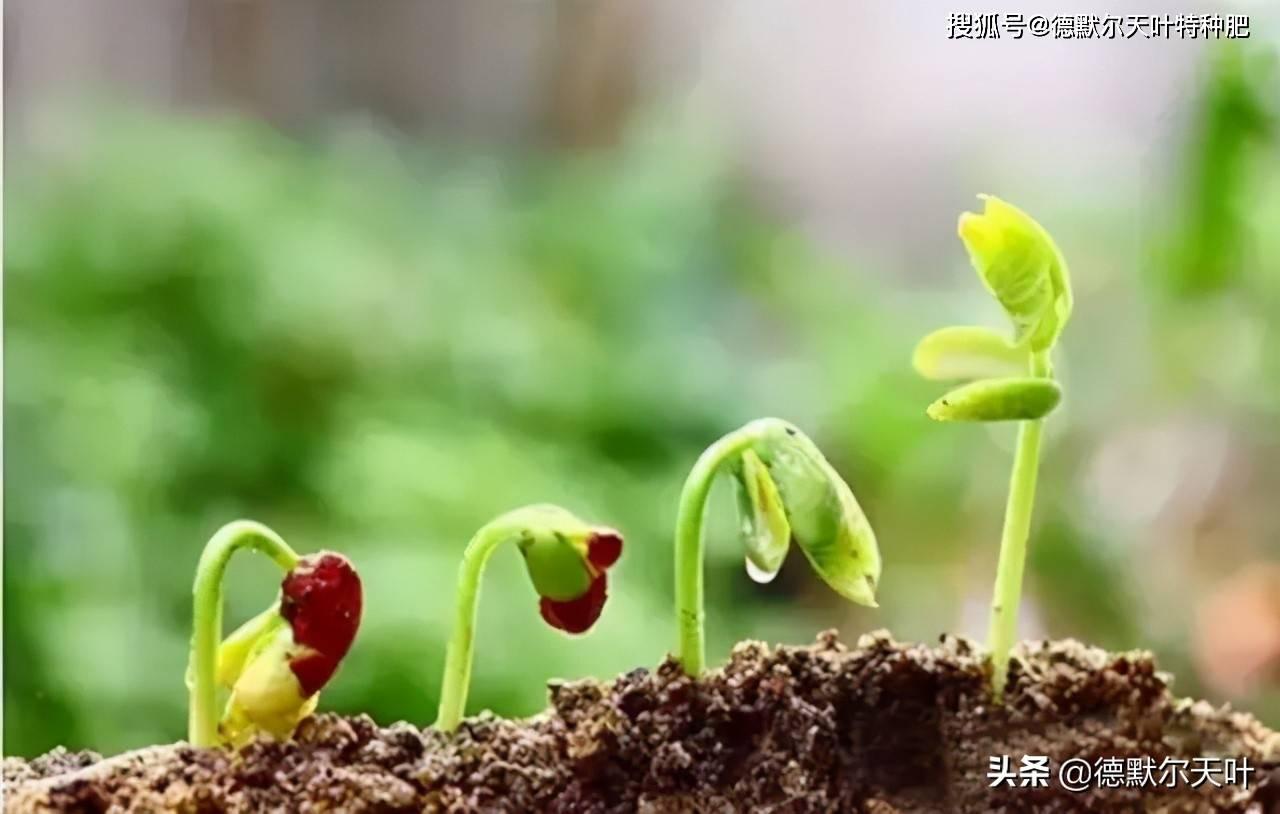 种植绿色食品的腐植酸土壤调理剂(肥)的制作方法  果农自制腐植酸