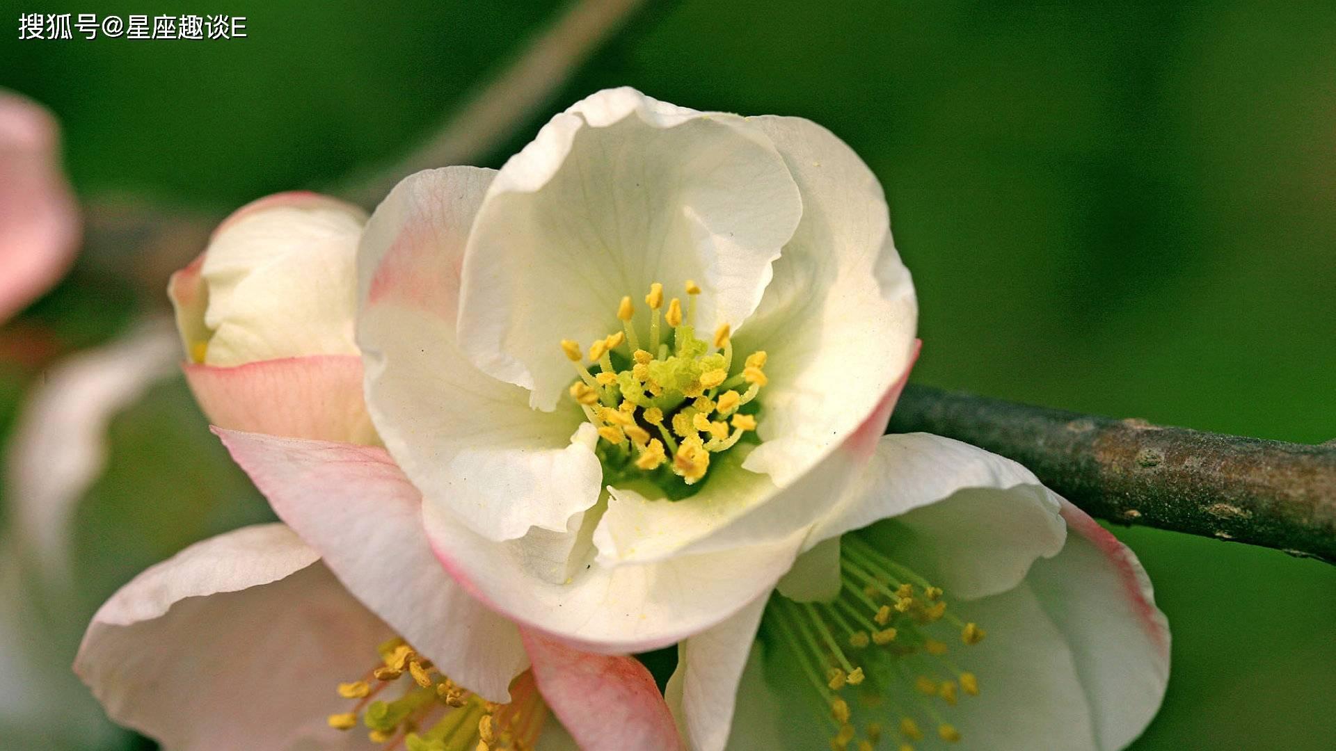 4月14日爱情运势:喜获良缘,牵手幸福的四大星座