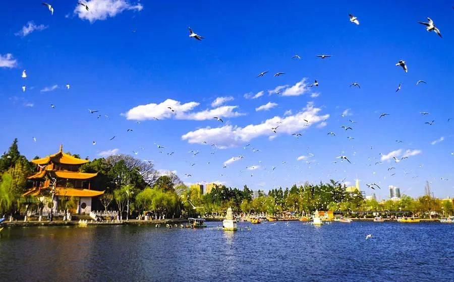 云南这座小城,即将绽放一大片紫蓝色花海,美如画!