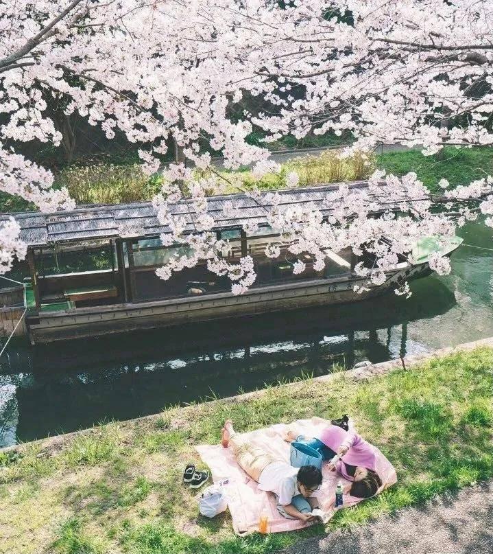 去日本遇见京都——叹那止不住的春色!