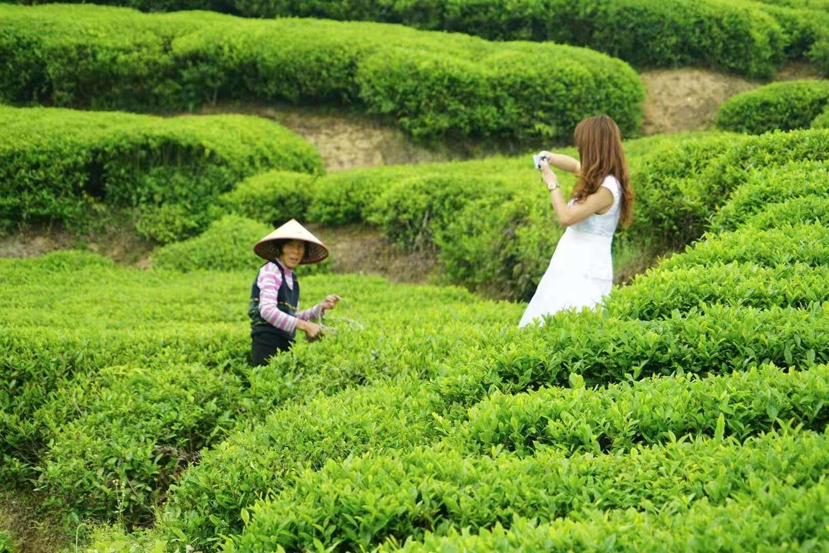 """原创             芳菲四月去问茶,走进浙南""""梅家坞"""",沉浸这片清新秘境中!"""