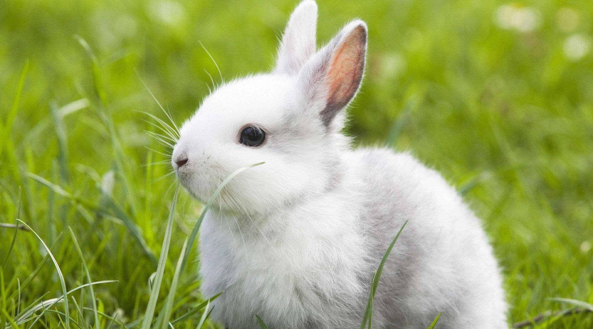 梦见两只兔子一白一黑 梦见一黑一白兔子什么预兆