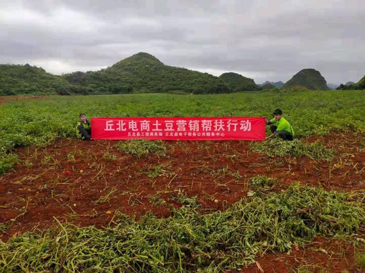 擦亮普者黑高原土豆品牌,丘北县农村电商助力产业兴旺的生动实践