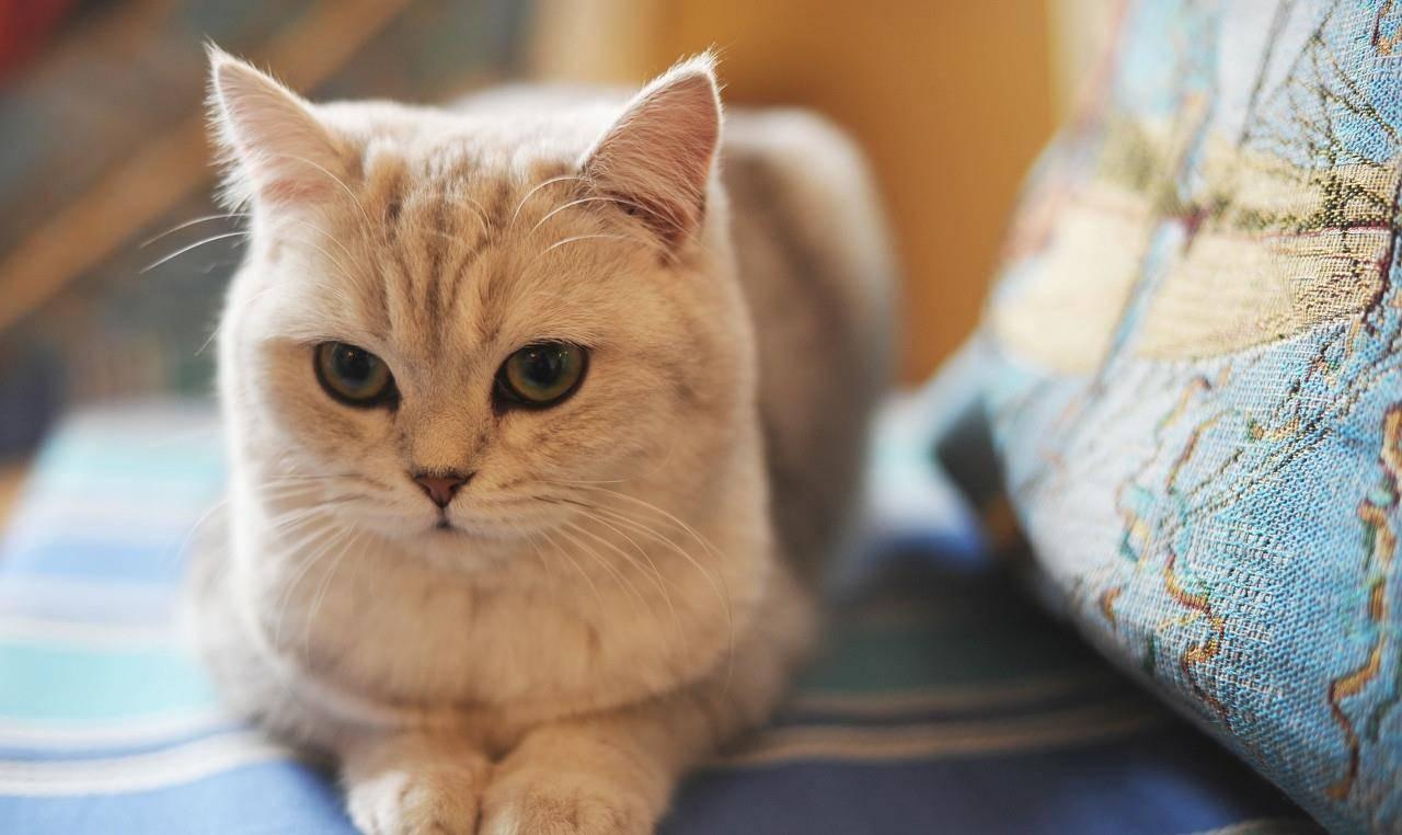 猫咪地址有谁知道 快猫回家地址入口