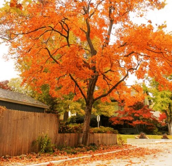 心理测试:你会选择哪棵树?秒测你最近的运气如何?  第4张